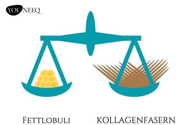 Cellulite Skin689 gesunde Haut im Gleichgewicht: Fettlobuli und Kollagenfasern