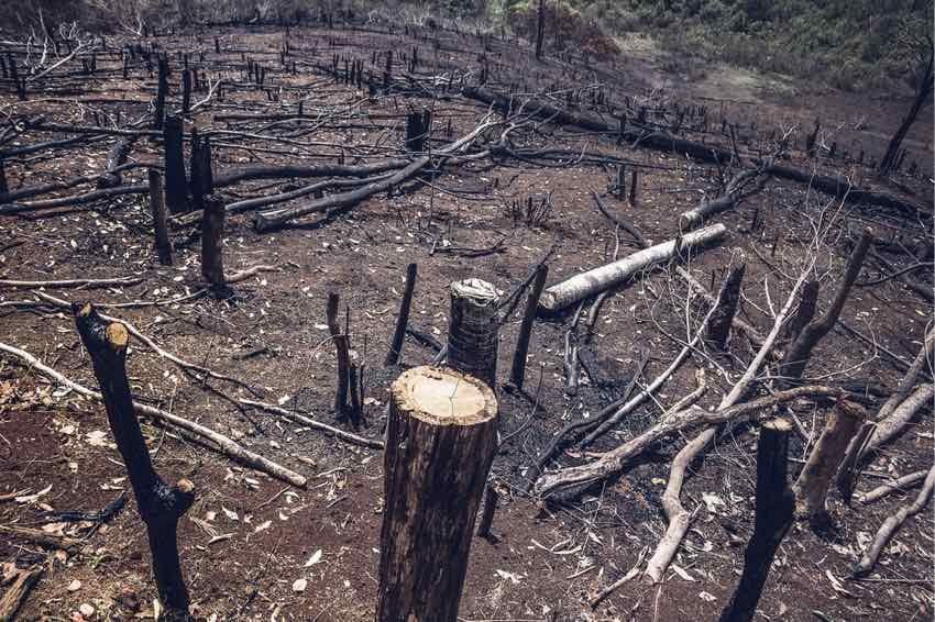 Palmöl Umwelt Schäden