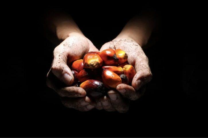 Palmöl ungesund in Kosmetik