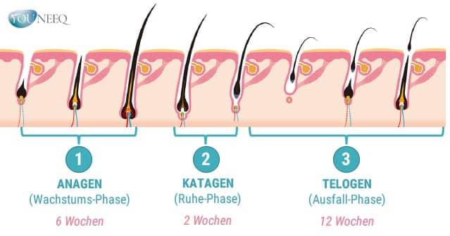 Wimpern wie schnell wachsen Haare?